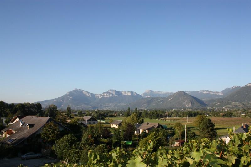 Vue des vignes depuis la maison